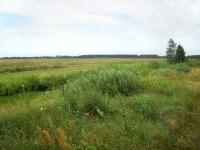 Rozległe łąki po zmeliorowanych bagnach Polesia, tutaj polowaliśmy.