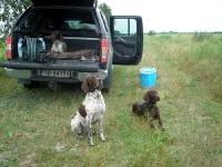 Przed wyjściem w teren. Obok Jagi i Flory brązowy, 6-miesięczny Atos będący na szkoleniu u Eleny.