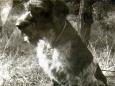 Na przełomie 1969/70, o ile pamiętam jesienią, pojechałem z ojcem po zamówionego szczeniaka wyżła szorstkowłosego. Jak przez mgłę pamiętam leśniczówkę po Kłobuckiem, podwórko z biegającymi szczeniakami. Siedziałem w Skodzie, szczęśliwy […]