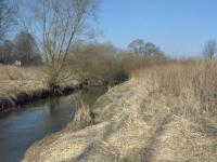 Wąska w tym miejscu dolina rzeki Pszczynki, wspaniałe siedlisko dla bażanta.