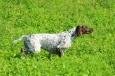 Pod koniec lipca wybieram się na konkurs wszechstronny wyżłów do Czech i w związku z wymaganiami organizatorów przygotowujących, jak co roku piękny katalog ze zdjęciami uczestniczących psów, postanowiłem zrobić krótką […]