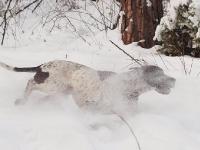 Śniegowe szaleństwa cd.