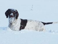 Żywioły -Furia w śniegu