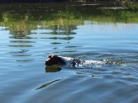 Żywioły -Furia w wodzie