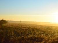 Słońce coraz wyżej i zaczynają ciągnąć gęsi - bajka