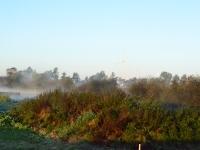 Z porannych mgieł wyłaniają się wiatraki