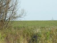 Na sąsiednie pola siadają kolejne klucze gęsi