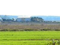 Kibice ustawili się nawet po drugiej stronie pola ale za to wygodnie na drodze