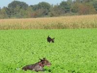 Kolejna para psów rusza w teren