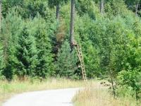 Ruszam w kierunku leśnych konkurencji