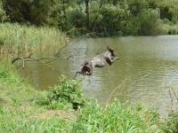 Marley - pokazowa praca w wodzie już poza konkurencją
