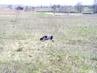 Międzynarodowe Field Trialsy - Będzin 2007