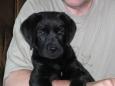 W maju 2003 r., po wielu miesiącach zmagania ze skutkami babesziozy odeszła Neska, córka Mufy. Wspaniała i dzielna suczka, która zapowiadała się na zupełnie wyjątkowego psa myśliwskiego. Do dzisiaj nie […]