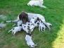 Miot G Flora i Utz - 4 tydzień, karmienie w ogrodzie