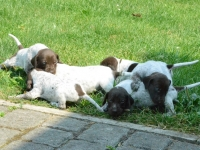 Szczeniaki zostają na trawie a matka umyka do cienia
