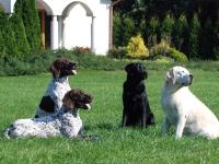 Labradory zawsze wnoszą spokój do układu
