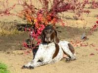 Królowa Jaga w jesiennym słońcu
