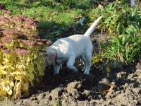Pufa rozrabia w ogródku