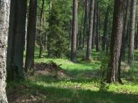 Czego już ten las nie widział!