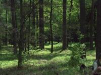 W takim lesie odbywał się tegoroczny konkurs