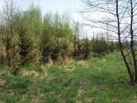 Rok 2011 - U podnóża zachodniego wału, od strony łąk