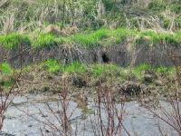 Rok 2011 - A to powód utrzymywania niskiego stanu wody - siedziba wydry