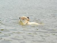 Tutaj tylko próbka jej zacięcia do nurkowania