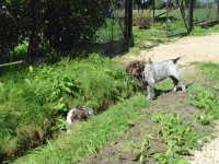 Ulubione miejsce zabaw szczeniaków - suchy rów i betonowy przepust