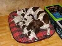 Tutaj jeszcze z Jagą w porodówce. Obok koszyki w których spędzały pierwsze dni życia dla sprawnego karmienia