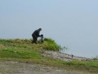 Krótka opowieść jak młody 6 miesięczny wyżełek aportował kaczkę z wody