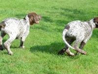 Kropka i Gonzo - widać charakterystyczne kropki na plecach suczki