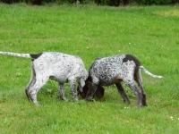 Gitta, Grey i ciekawy zapach w trawie