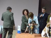 Zwycięża wyżełek szorstkowłosy z Ars Venandi