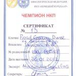 FIORD - Certyfikat Championa Rosyjskiego Klubu Wyżła Krótkowłosego