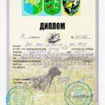 FIORD - dyplom przepiórka