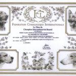 FIORD - Dyplom Międzynarodowego Championa Piękności - C.I.B.