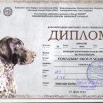 Dyplom - III Klubowa Wystawa Wyżłów - Kijów, Ukraina 2012