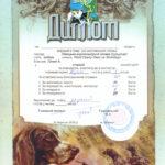 Winnica, Ukraina - ocena Federacji Psów Myśliwskich Ukrainy 2012