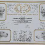 Dyplom Międzynarodowego Championa Wystawowego C.I.E. FCI