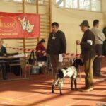 HEBE Zielona Brda Krajowa Wystawa Bydgoszcz 12.02.2012 r. Zwycięstwo Rasy i BOG-3