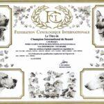 FIORD Dyplom C.I.B. FCI
