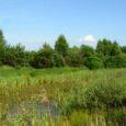 """Już 12 lat minęło od założenia przez myśliwych z Koła Łowieckiego """"Ostoja"""" w Gliwicach stawu a właściwie, w duchu dzisiejszych czasów, użytku ekologicznego w dolinie Pszczynki. Celem było zróżnicowanie środowiska […]"""