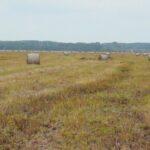 Bezkresne biebrzańskie łąki - świat o którego przetrwanie ciągle toczy się walka