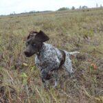 Goran - bieg przez łąkę