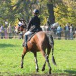 Pokazy jeździeckie - pogoń za lisem