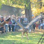 Pokaz tresury oraz ciekawa opowieść o ptakach drapieżnych