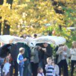 Pokazowy lot sowy