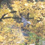 Pokaz tresury białozora - niezwykle cennego ptaka wykorzystywanego w sokolnictwie