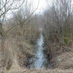 Po drodze mijam, zarośnięty obecnie rów na którym przed laty z zapałem polowałem na piżmaki