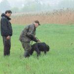 Dyscyplinowanie stójki - w trawie przepiórka a w akcji Konrad, gordon i Wiesiek